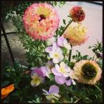 我が家のベランダガーデニングも春満開!