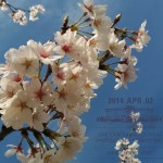 今年も桜を満喫!